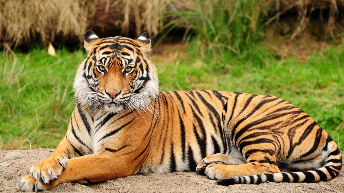باغ وحش وکیل آباد مشهد کجاست و چه حیواناتی در آن نگهداری می شود؟