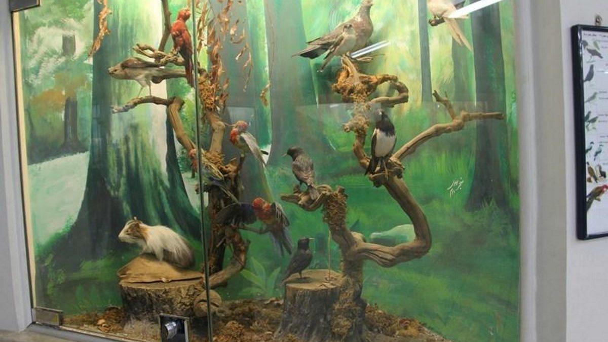آشنایی با جاذبه ها و برنامه های موزه علوم و تاریخ طبیعی مشهد
