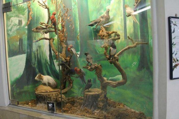 جاذبه ها و برنامه های موزه علوم و تاریخ طبیعی مشهد